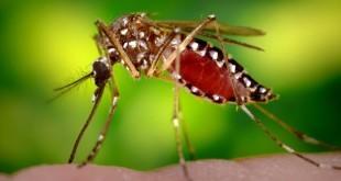 10 Cosas que debes saber sobre el Zika - Soy Playense
