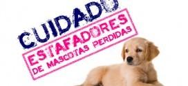 Estafadores de mascotas perdidas