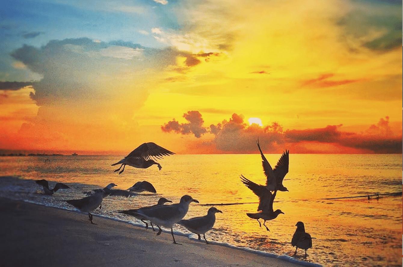 7 Amaneceres Espectaculares De Playa Del Carmen